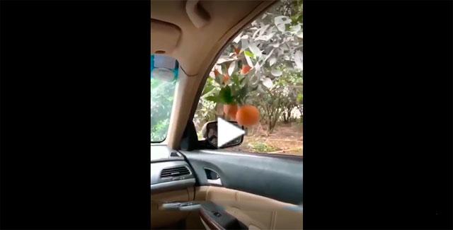 https://www.ahnegao.com.br/2019/05/como-colher-frutas-sem-descer-do-seu-carro.html