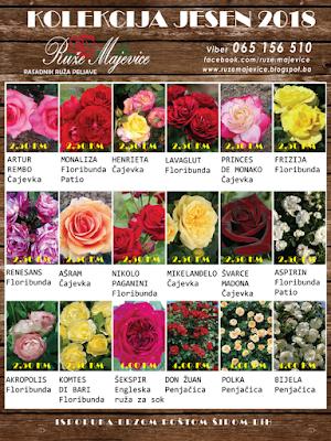 Kalatog sadnica ruža, prodaja Jesen 2018