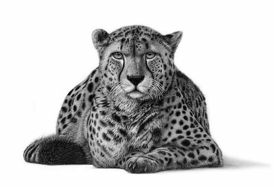 Realistic Animal Drawings Hyper Realistic Animal Drawing Cheetah