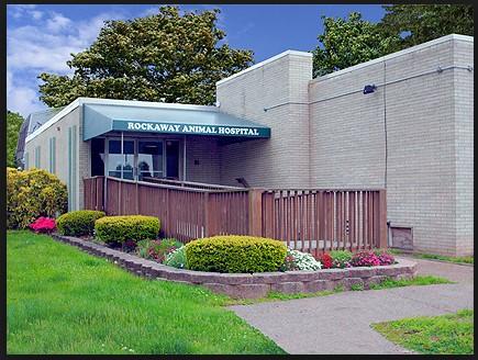 Animal Hospital Of The Rockaway