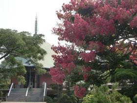 本覚寺のサルスベリ