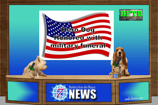 Dogs reporting the BFTB NETWoof News