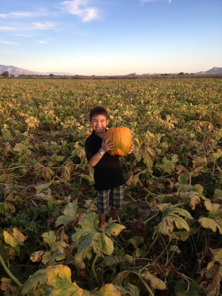 Arizona families: marana's pumpkin patch and farm festival opens.
