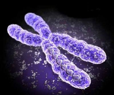Pengertian dan Sifat - Sifat Kromosom