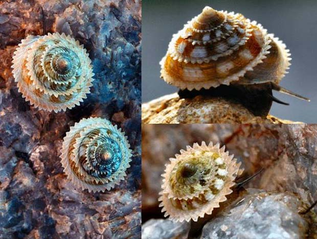 Awesome shell dude! - 28 Awe Inspiring Photos That Prove Just How Cool Mother Nature Is
