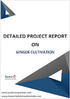 Project Report on Ginger Cultivation