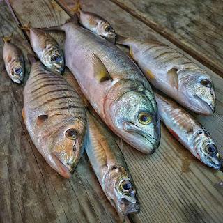 تفسير الاحلام سمكه زرقاء , رؤية الاسماك الملونة فى المنام بالتفصيل