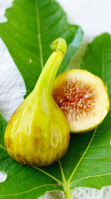 UZUN BOGAZ Figs