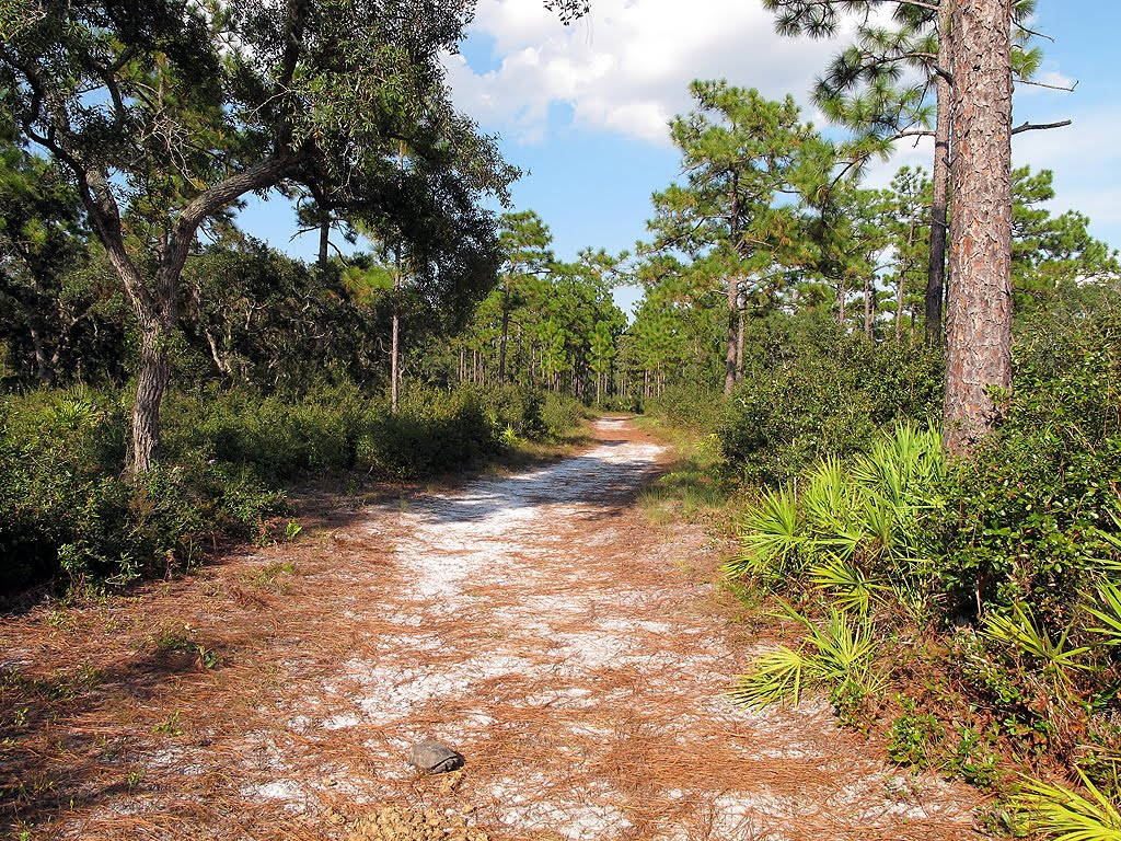 Florida Hikes And Other Outdoor Information Econ River
