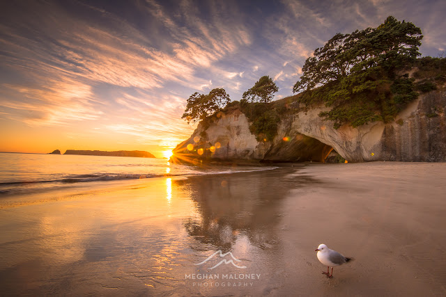 sunflare cathedral cove seagull