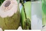 Manfaat Air kelapa  Muda Untuk Kesehatan Tubuh Kita