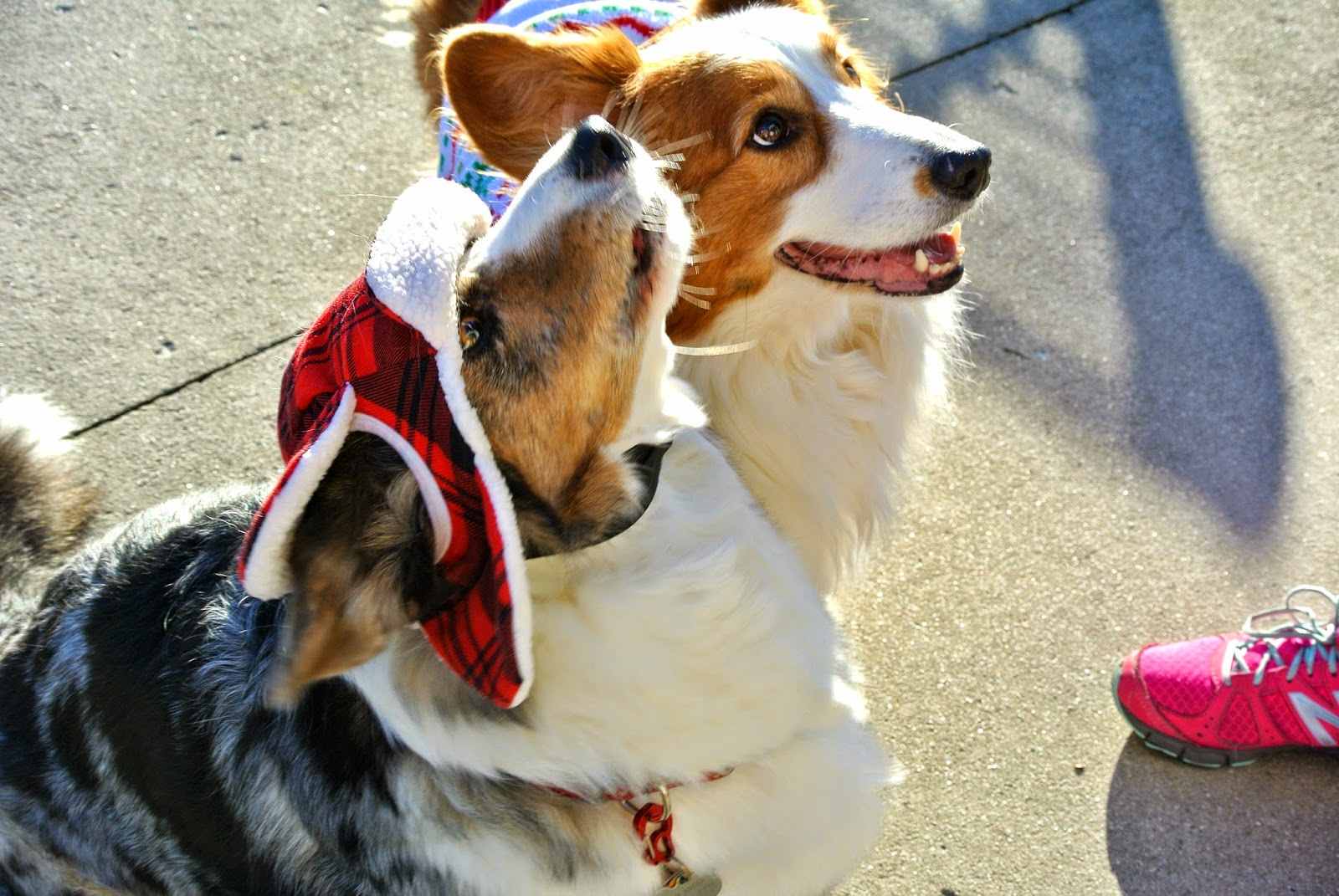 2f63f80188b Trapper Hat Dog Related Keywords   Suggestions - Trapper Hat Dog ...