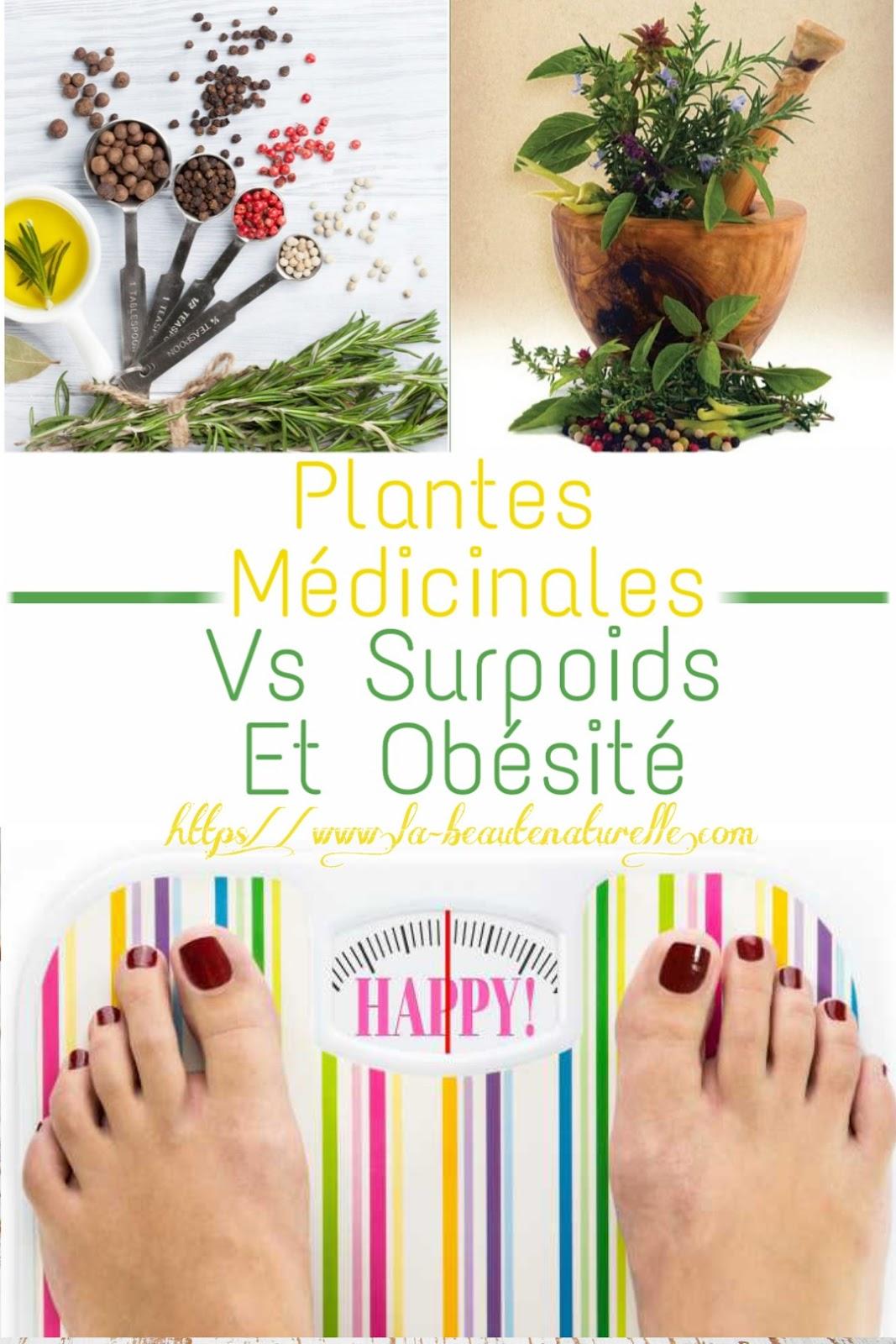 Plantes Médicinales Vs Surpoids Et Obésité