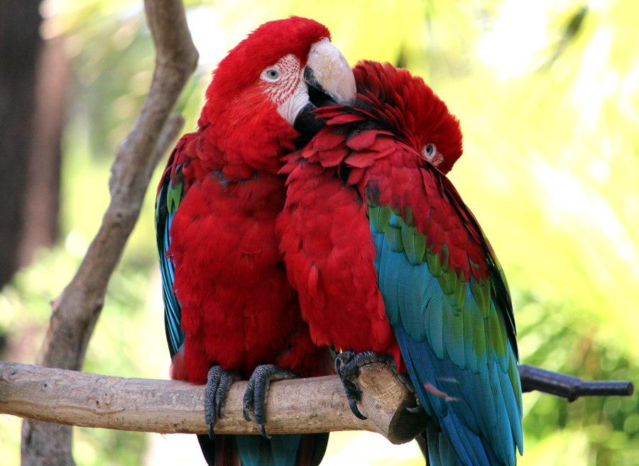 Sortie en famille - Zoo de la Palmyre