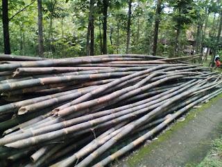 Jual Bambu Apus Area Solo Sragen Murah !!! (Supplier)