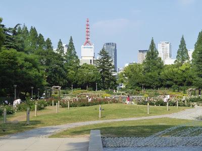 靭公園(うつぼこうえん)のバラ園 大阪科学技術館