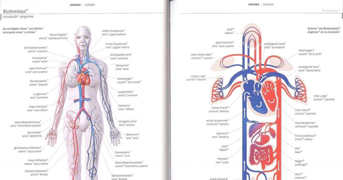 Berühmt Normale Aortenbogen Anatomie Fotos - Anatomie Ideen ...