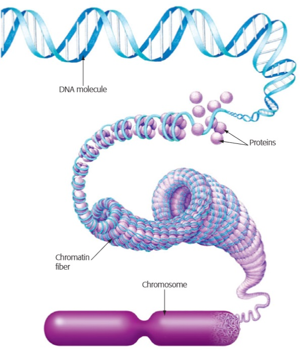 gene dna and chromosome relationship poems