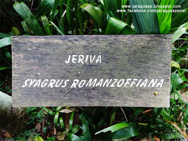Placa no início do caminho identifica um jerivá