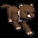 Chocolate Cat Cub - Pirate101 Hybrid Pet Guide