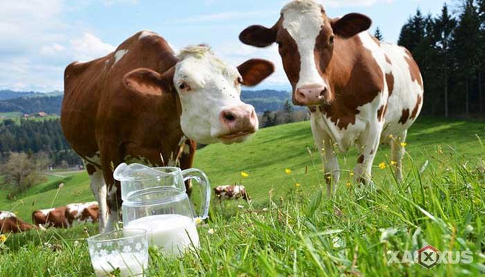 Minuman yang dilarang untuk ibu hamil - Susu segar
