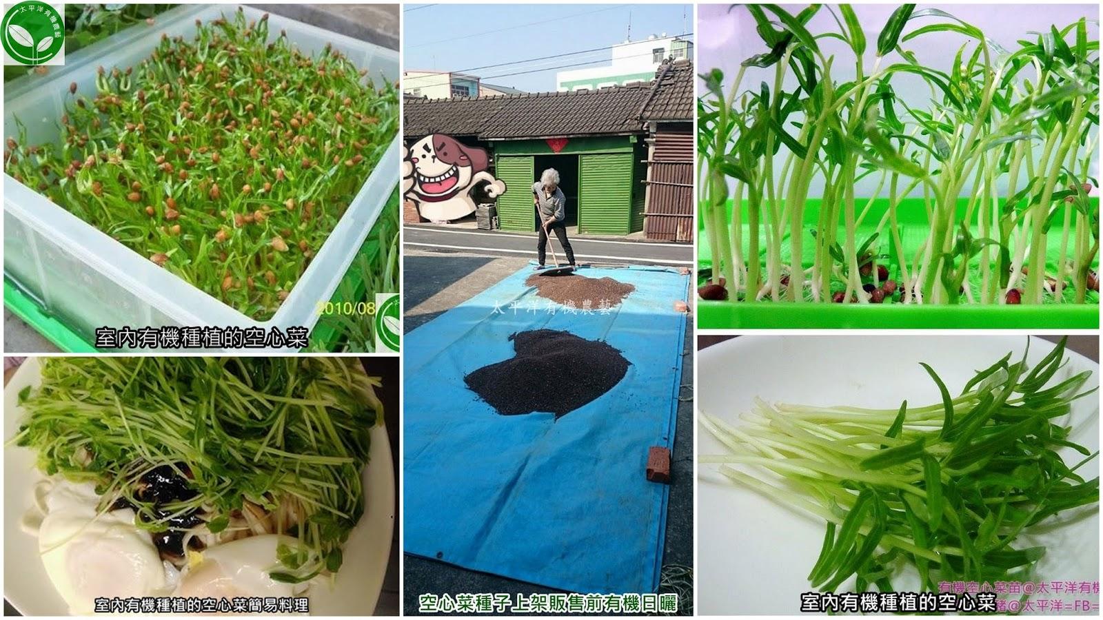 空心菜,炒空心菜,炒空心菜食譜,腐乳空心菜,蕹菜栽培,空心菜種植,空心菜種子發芽,空心菜種植方式,空心菜營養