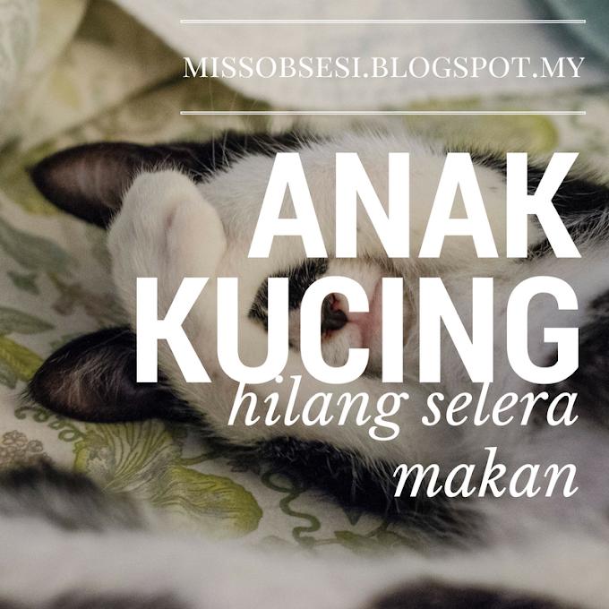 Ambil ubat Anak Kucing Hilang Selera di My Cat Clinic Kulim.