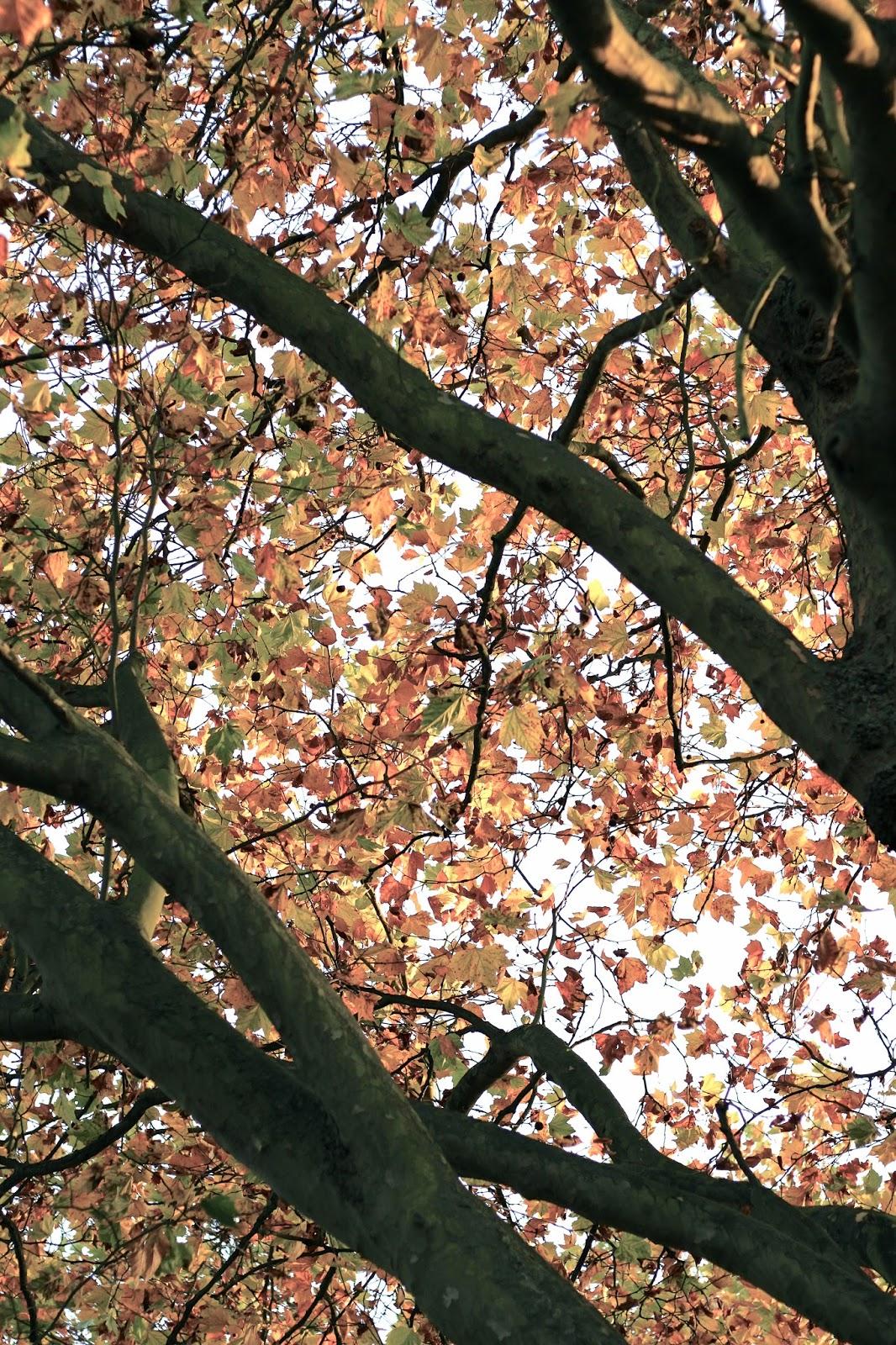 Autumn orange and yellow leaves 2016