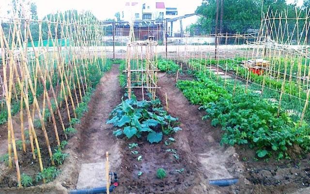 Η εφορία επέβαλλε τέλος επιτηδεύματος 800 ευρώ σε σχολικό λαχανόκηπο