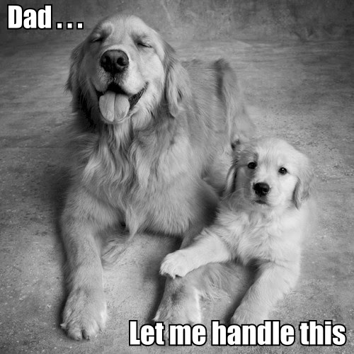 Funny Cute Dad Dog Meme Joke Picture - Dad Let me handle this