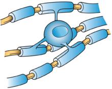 Sinir Sisteminde Bulunan Hücre Tipleri ve Özellikleri