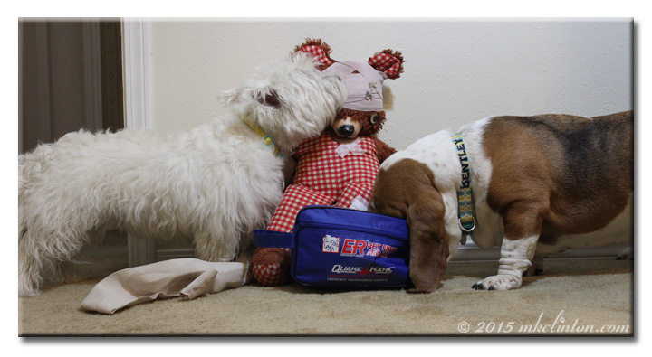Westie and Basset with first aid kit and bandaged teddy bear