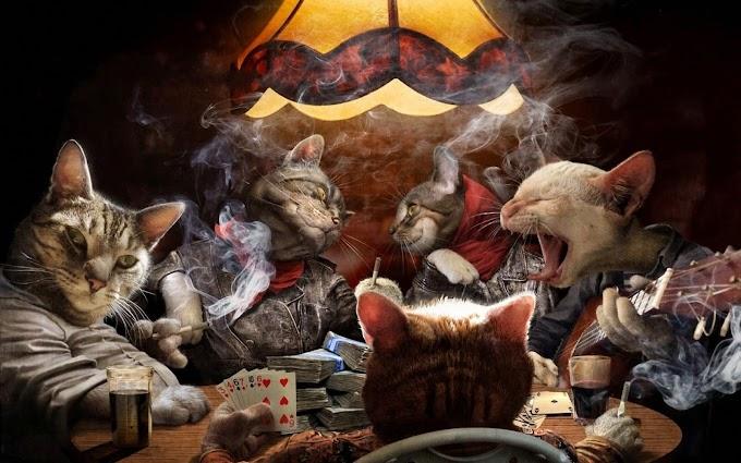 Game Game Bertemakan Kucing Terbaik 2018