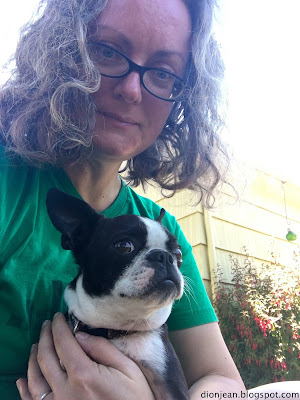 Sinead the Boston terrier and the author