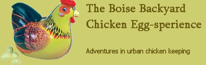 The Boise Backyard Chicken Experience