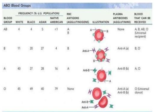 Golongan Darah dalam sistem ABO