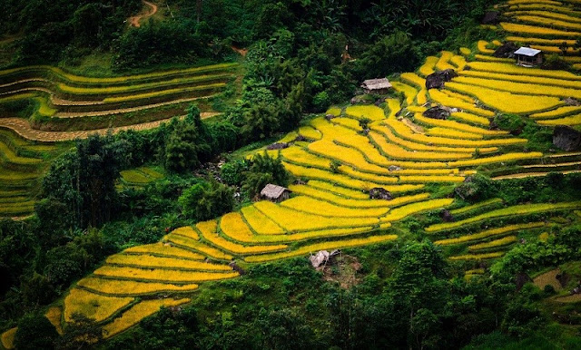 Hoang Su Phi Ha Giang 1