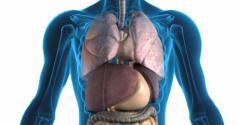 Sırt Ağrısı Akciğer
