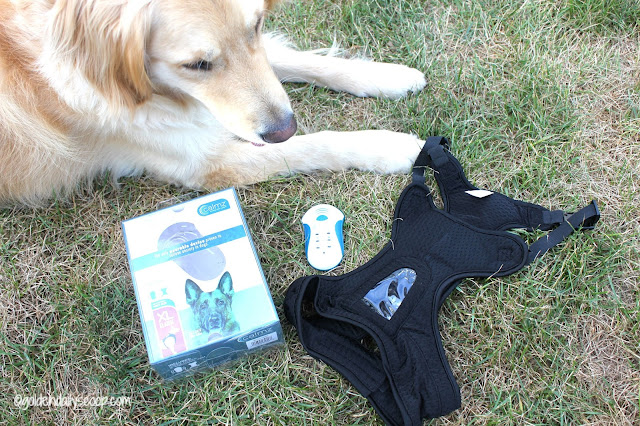 relieving anxiety in dogs with calmz anxiety relief vest