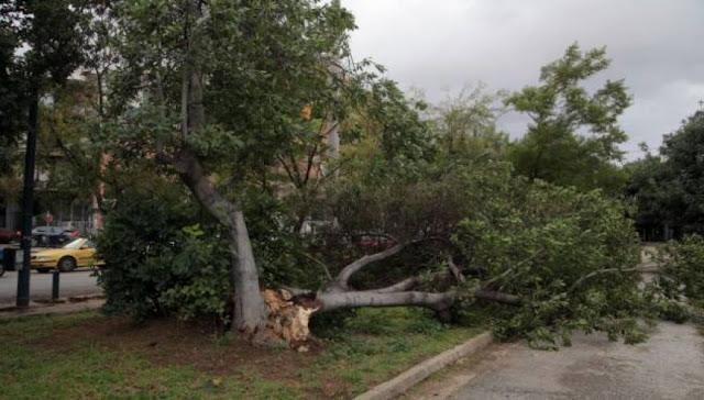 Αττική: 35 κοπές δέντρων λόγω των ισχυρών ανέμων