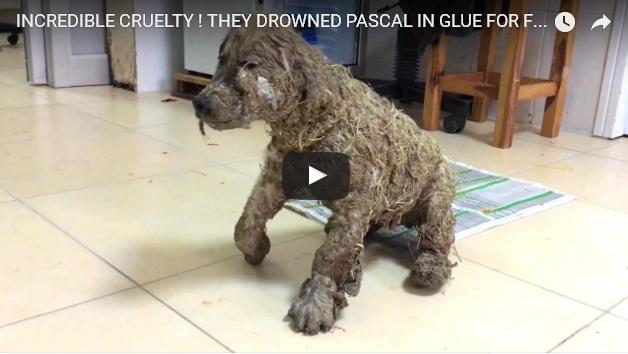 Dejan a un cachorro inmovilizado tras cubrirlo de pegamento y barro