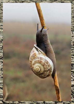 Bay Area Bird Watching: Snail on wild fennel