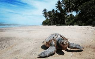 7 Rekomendasi Tempat Wisata di Merauke, Surga di Timur Indonesia 1