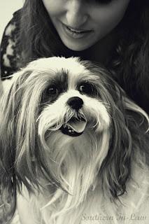 Kristy and Chanel - Chihuhua cross Shitzu Puppy