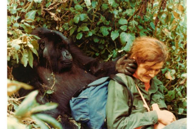 Dian Fossey Digit