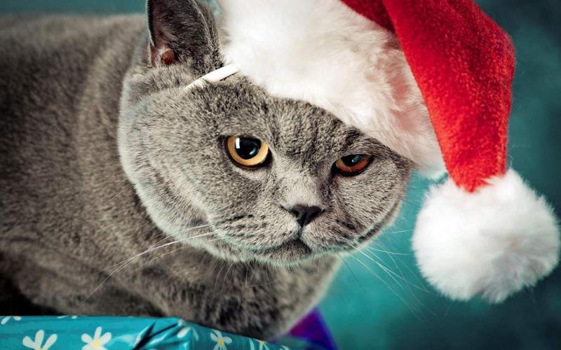 gatos navidad  Imágenes grandes