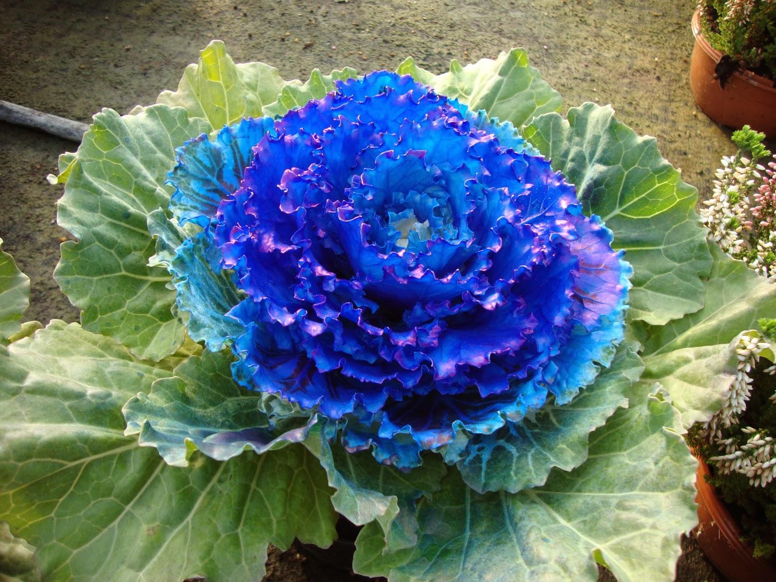 Un piccolo giardino in citt ancora piante colorate for Piante colorate da giardino