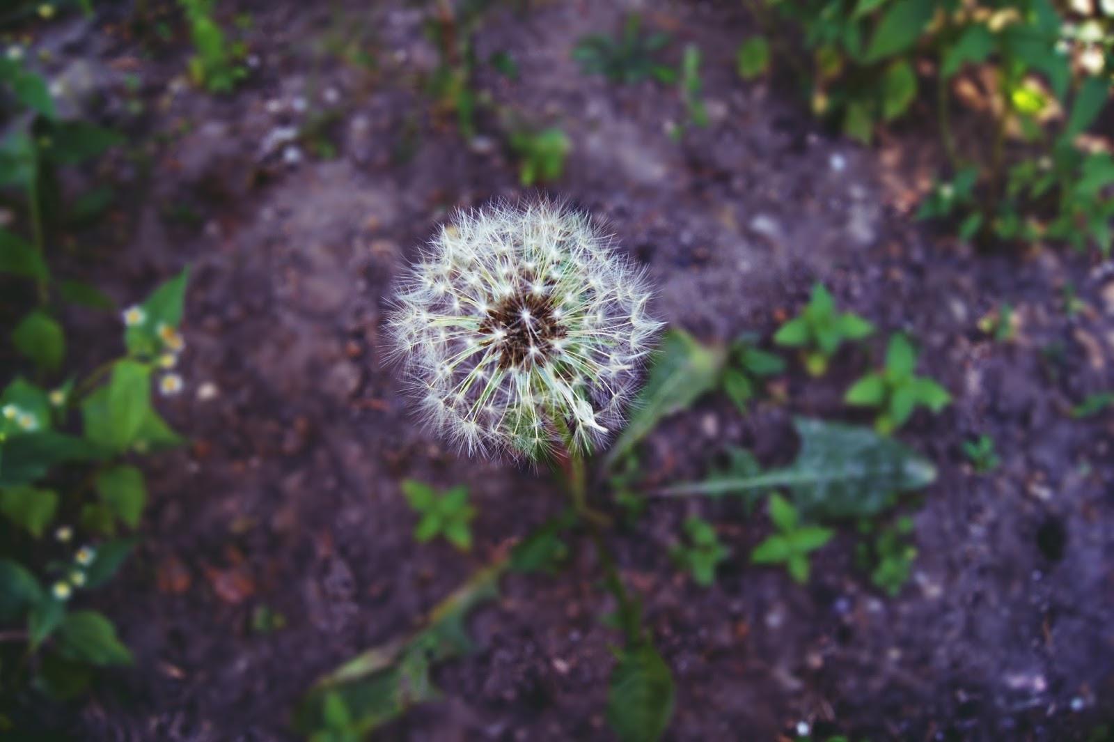 Zdjęcia z ogrodu. Lifestyle