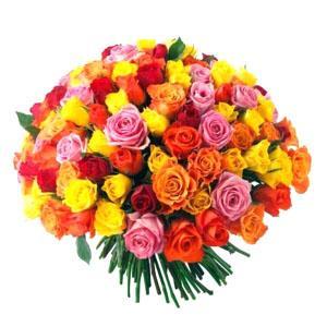kwiaty radom