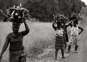 African woman carrying fire wood on the head.